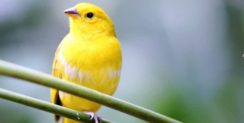 canary-importance-of-data